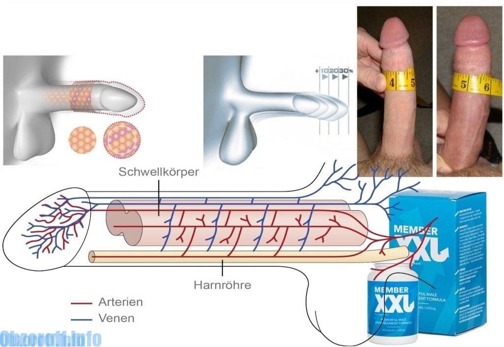 Penis zunahme groe naturliche die