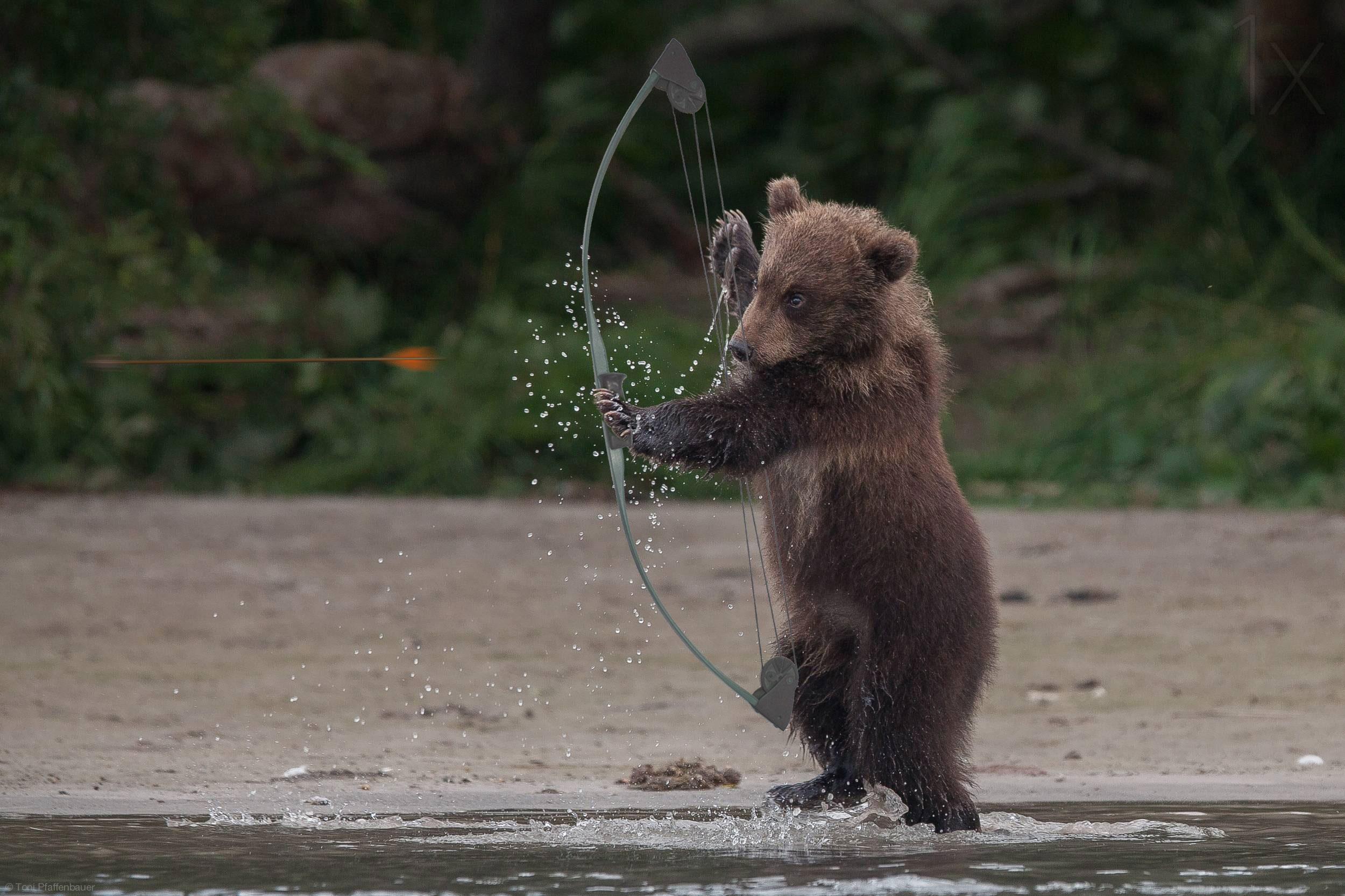 Verschlossenen turen bear hinter dancing