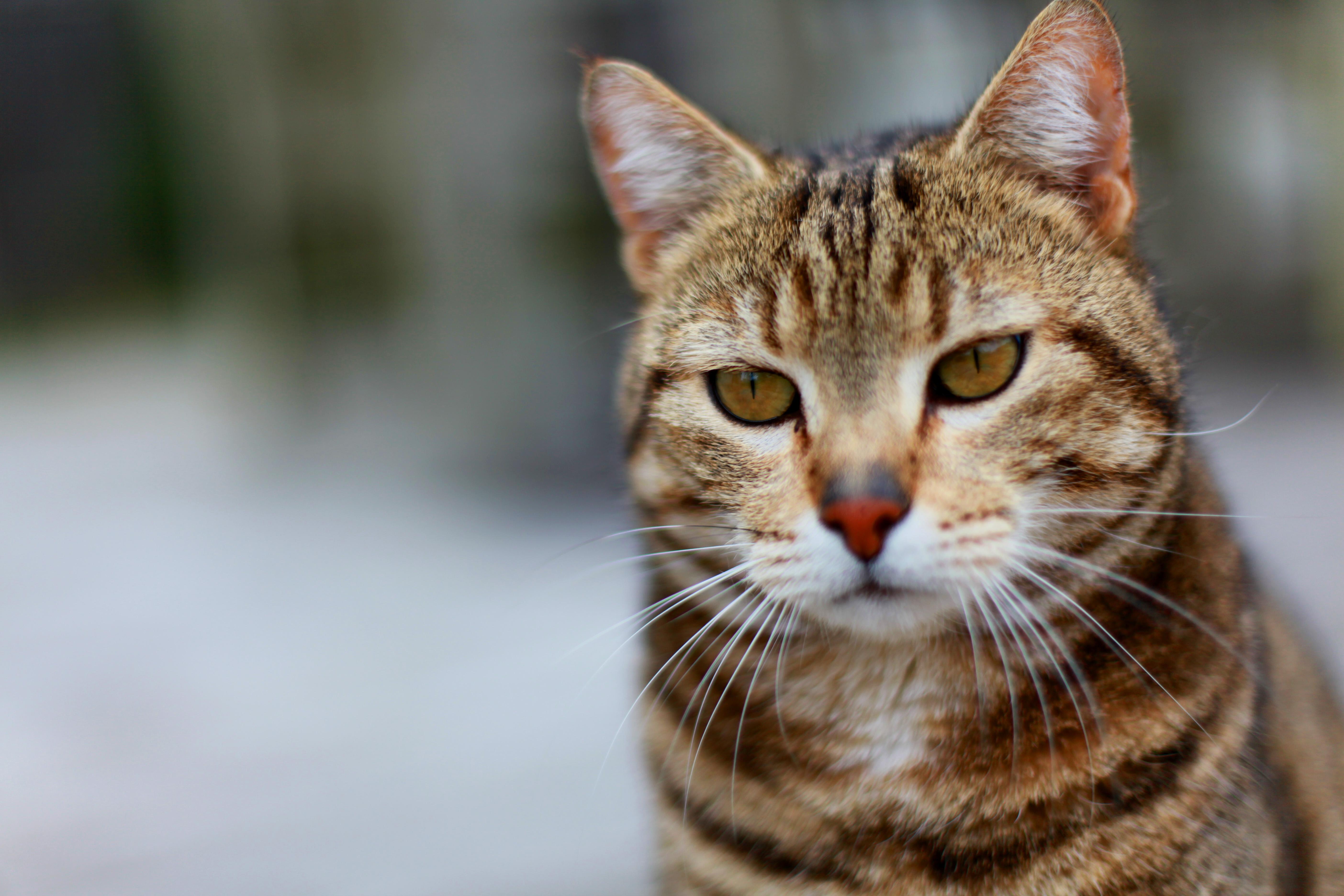 Pussys von kostenlose rasierte bilder alteren