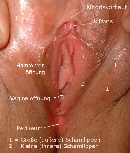 Vulva nackte Vagina Fotos