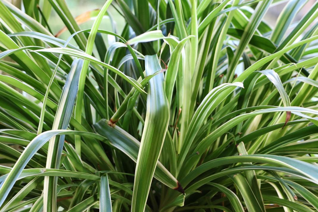 Streifen von dunnen gras wasser