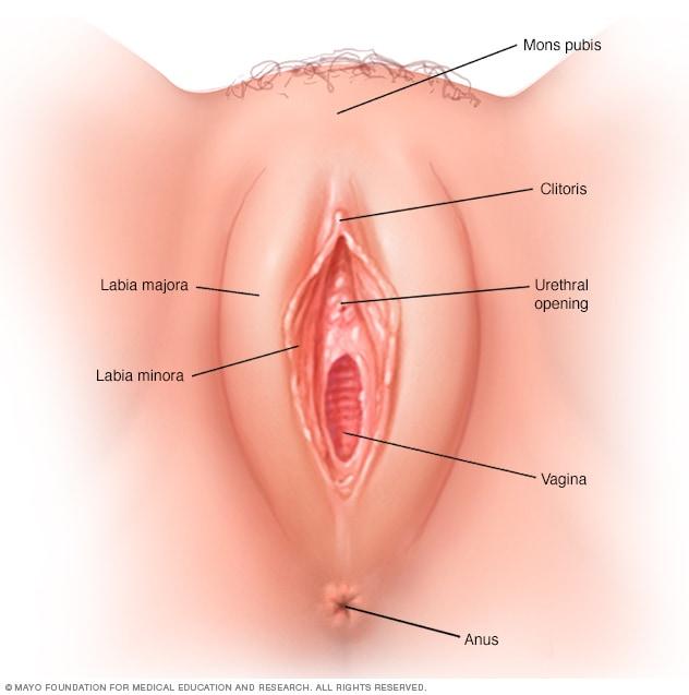 Mujer la vagina de una